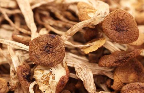 茶树菇烘干机案例分析